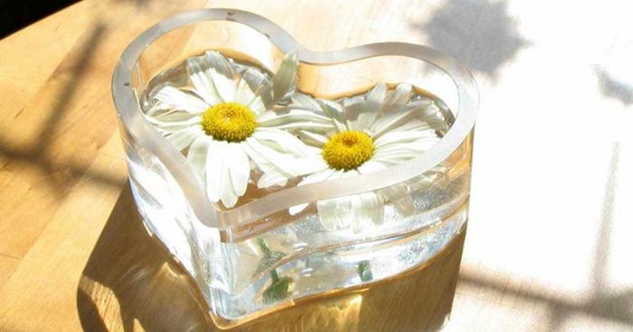 Замороженный отвар ромашки для лечения геморроя